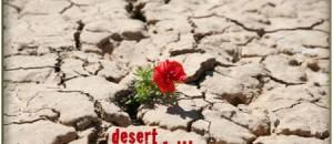 Desert Faith