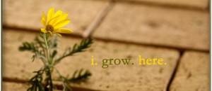 I Grow Here
